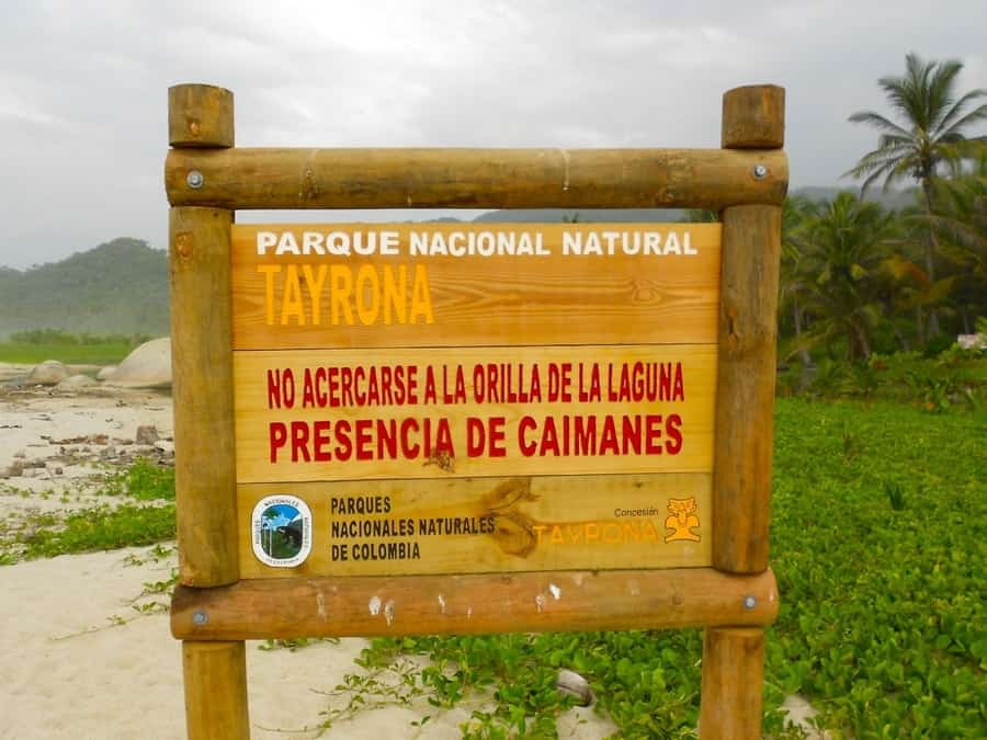 Caimani al Parco Tayrona, Colombia