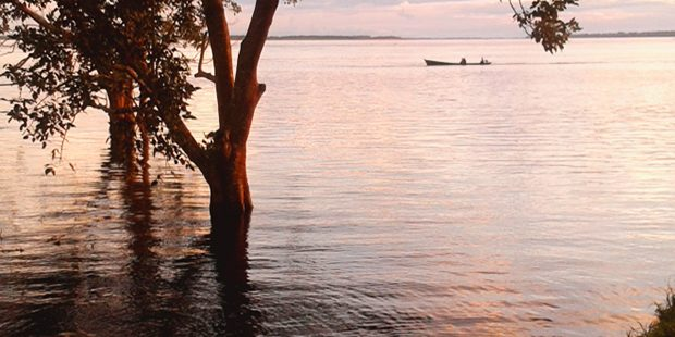 perché si vuol distruggere l'amazzonia