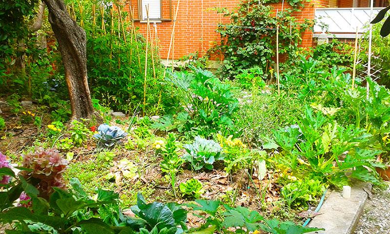 Come creare un orto sinergico e biologico, nella foto l'Eco B&B I due oleandri