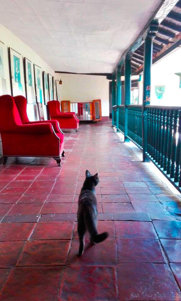 amore per i gatti, ovunque vado ne trovo uno!