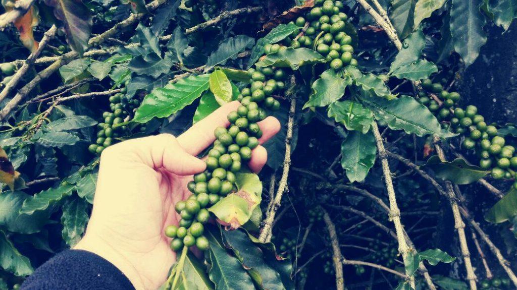 chicchi-di-caffè-viaggiare-in-colombia