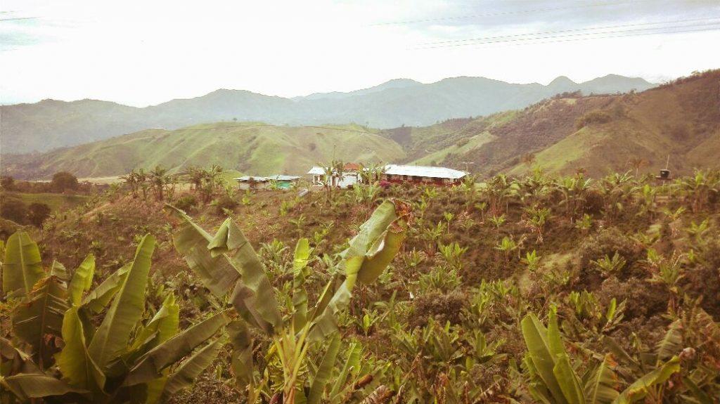 fattoria-di-banane-e-caffe