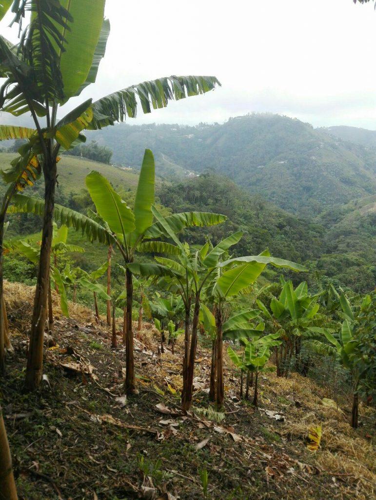 hotel-con-natura-selvaggia-manizales-colombia