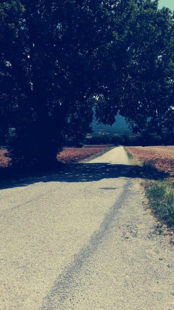 campo-con-albero-ed-ombra.jpg