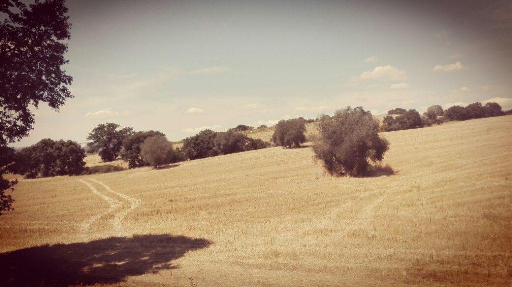 paesaggio-campagna-toscana.jpg