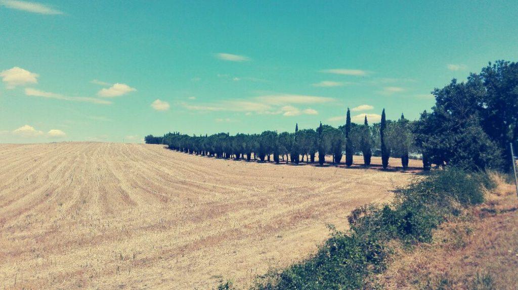 paesaggio-toscano-con-pioppi.jpg