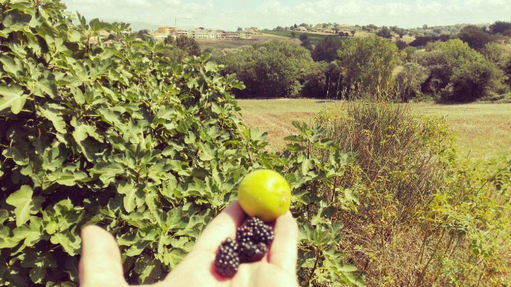 raccolta-frutta-per-strada.jpg