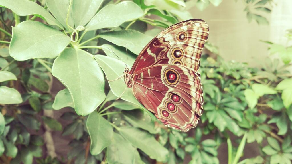 effetto farfalla: Il battito di ali di una farfalla può scatenare un uragano dall'altra parte del mondo