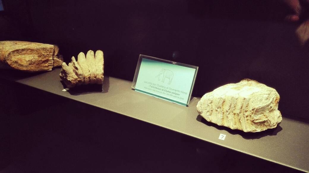 museo archeologico grumentum