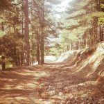La strada che porta ai giganti di Cozzo