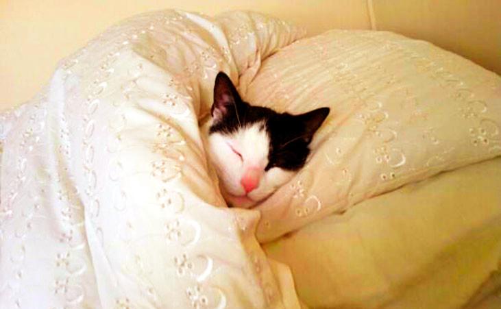 gatto che dorme nel letto