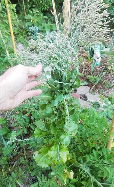 insalata semi