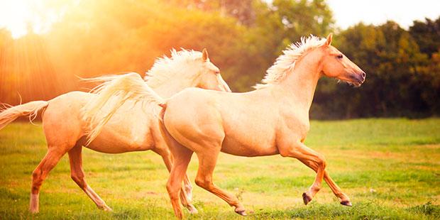 una storia zen sui cavalli