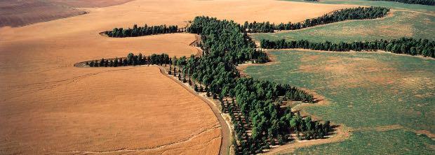 alberi bloccano erosione del suolo