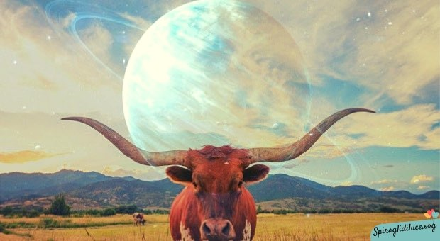 Urano in Toro 2019