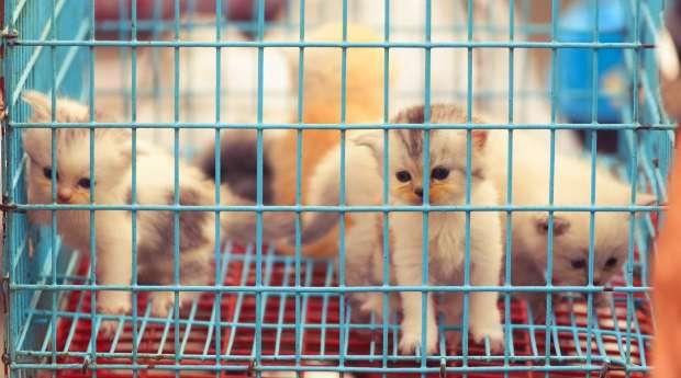 La Francia vieta di esporre Animali in Vetrina e nei Circhi – Perchè è importante