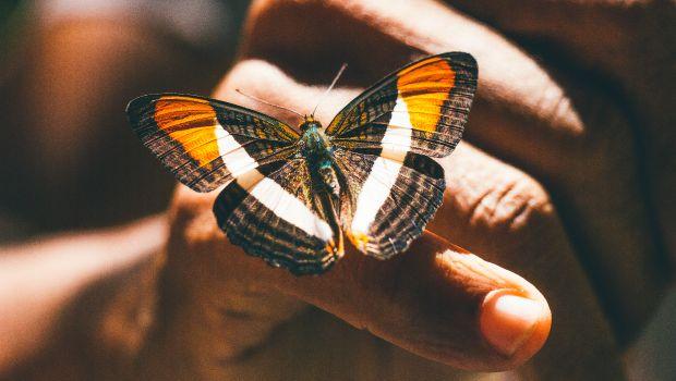 effetto farfalla significato
